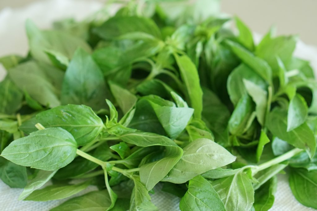 A bunch of basil on a paper towel